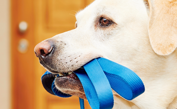 5 Dog Walking Apps to Try