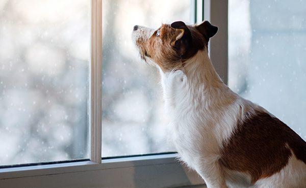 Fait-il trop froid pour votre animal de compagnie?