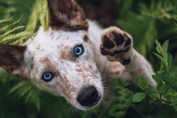 Comment choisir un aliment pour animal de compagnie?