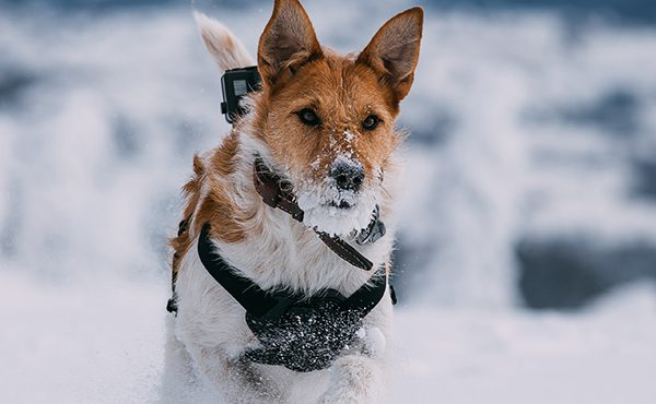 Winter Safety Tips for the Active Pet