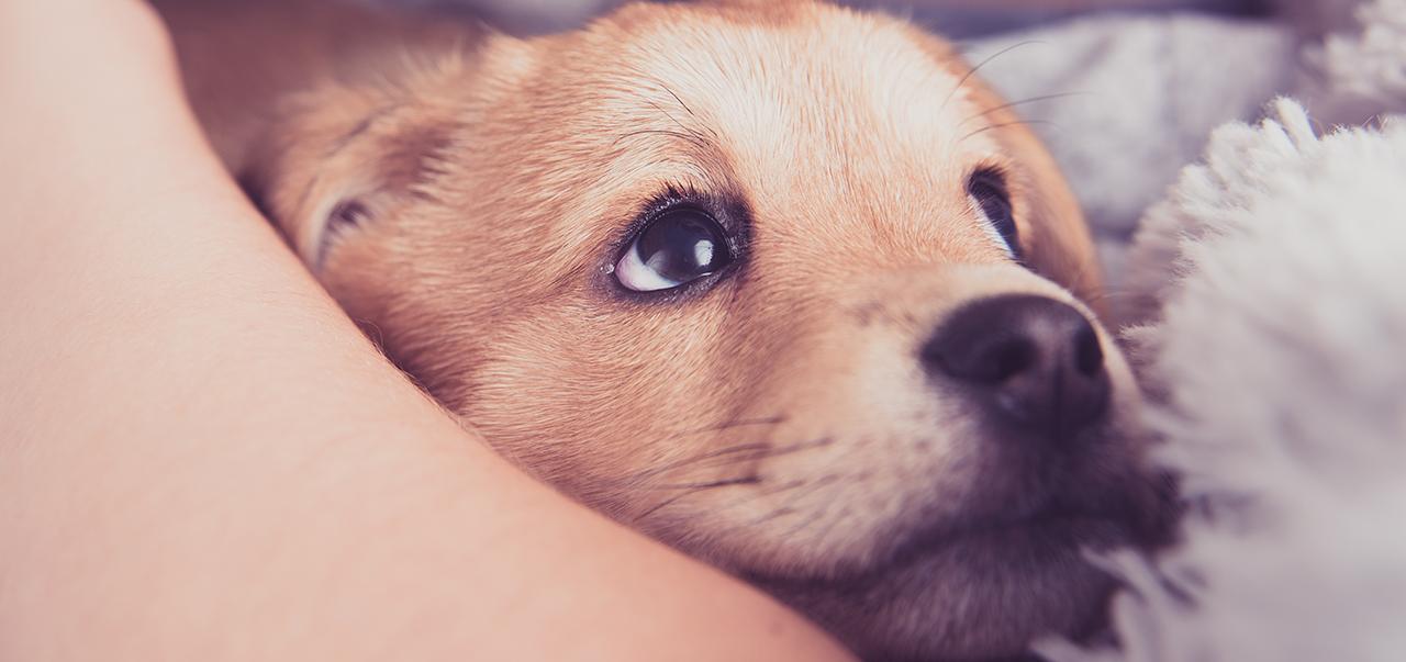 New puppy checklist