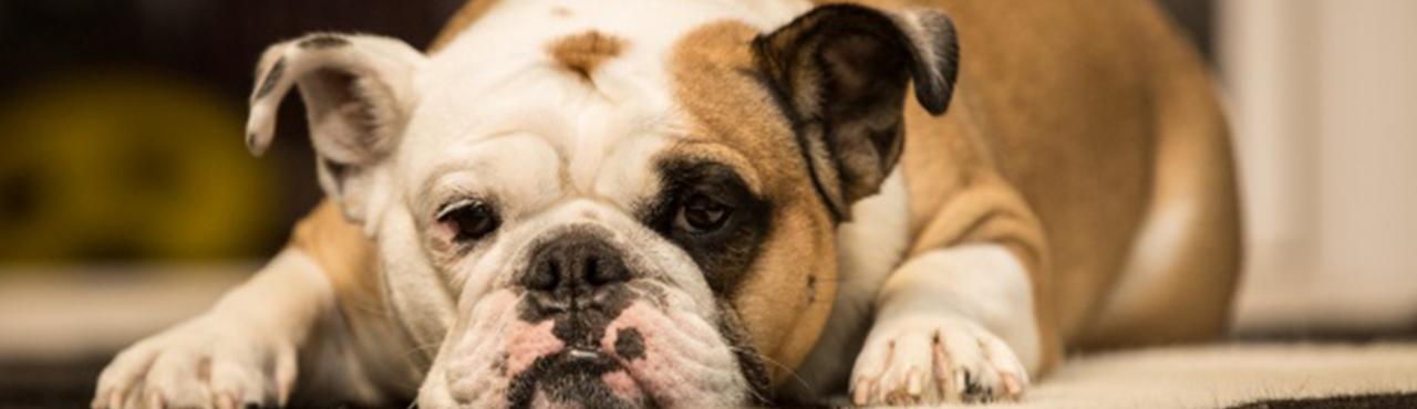 Pets help improve your mental health.