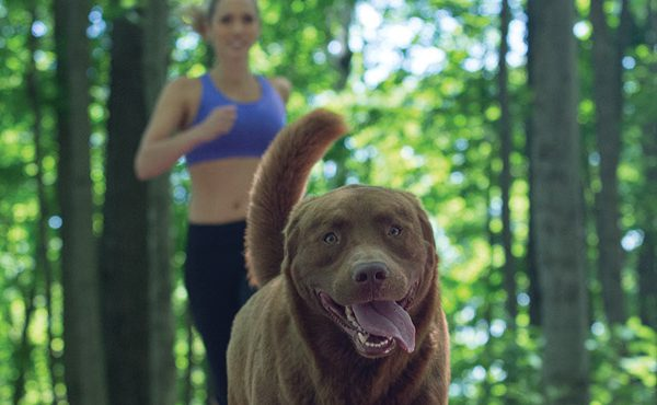How to Train Your Dog to Listen When Off-Leash