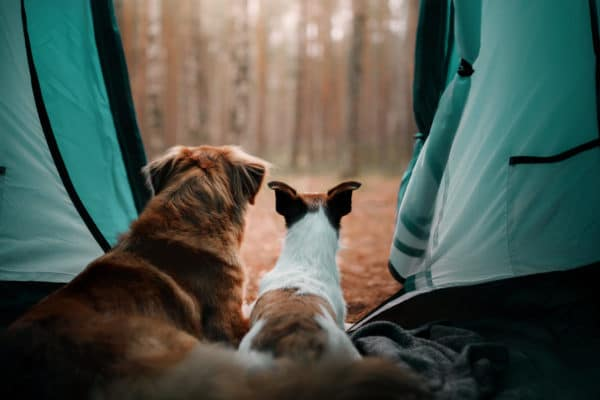 Top 10 Places to Camp With Your Dog in Canada