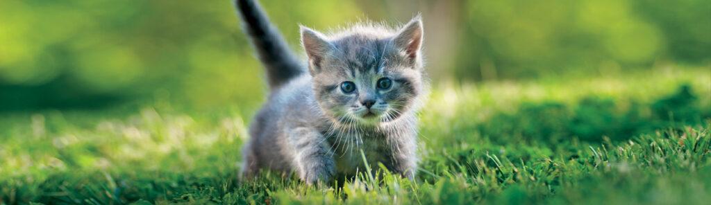 kitten safe outdoors