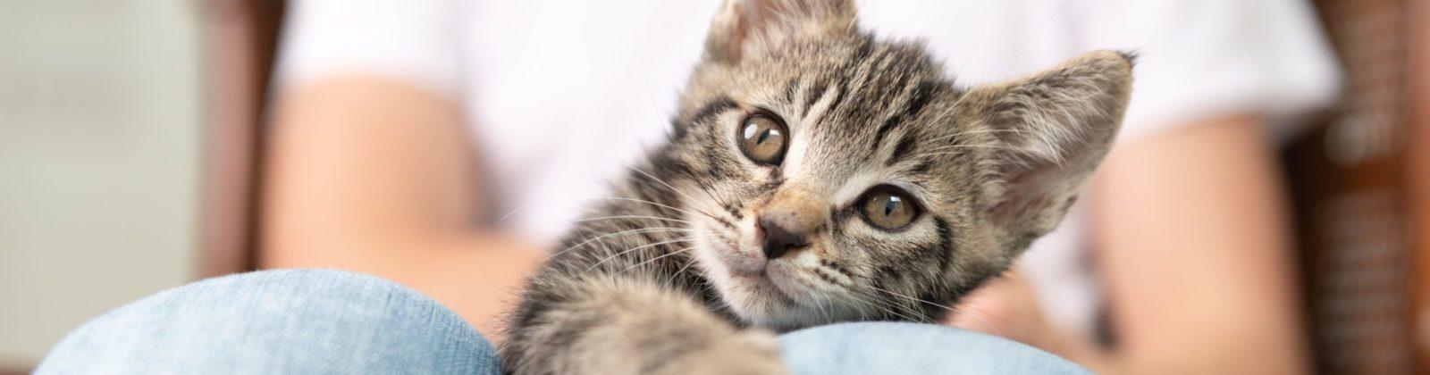 Nutrience Infusion kitten food