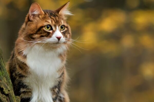 Les chats montrent leur amour d'une manière que les chiens n'oseraient pas ❤️