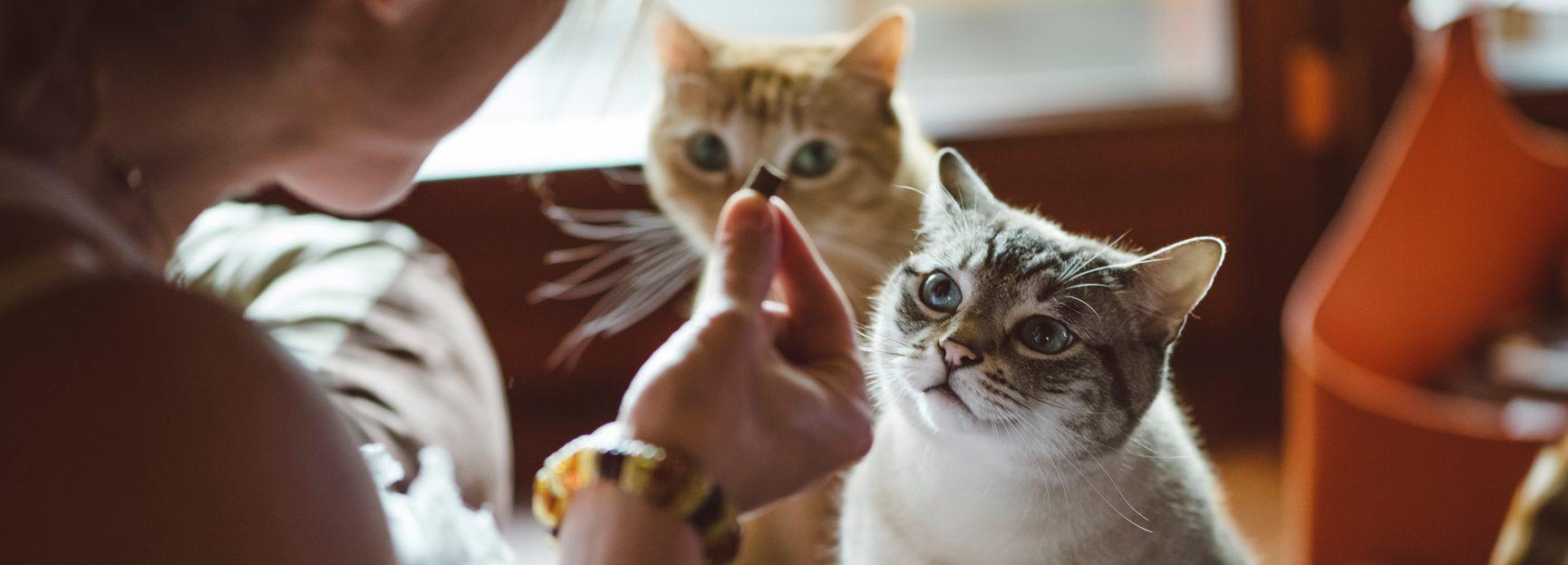 Nutrience SubZero freeze dried treats topper cats