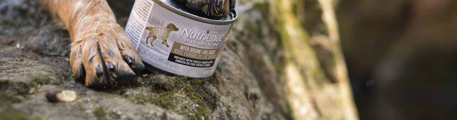 Nutrience pate Infusion chien dog