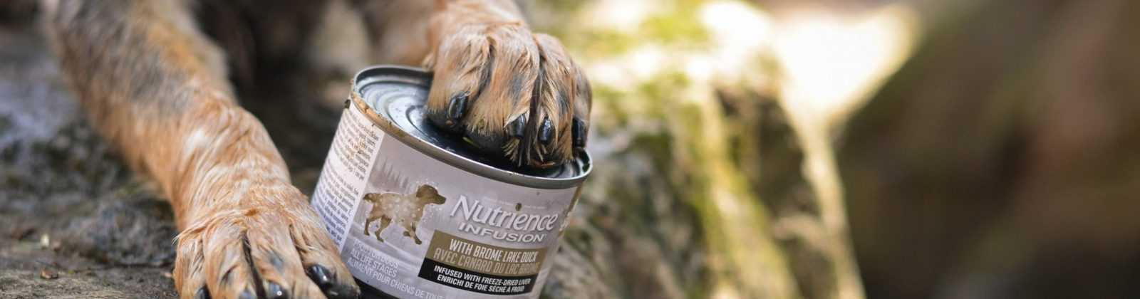 Nutrience pate Infusion duck chien dog