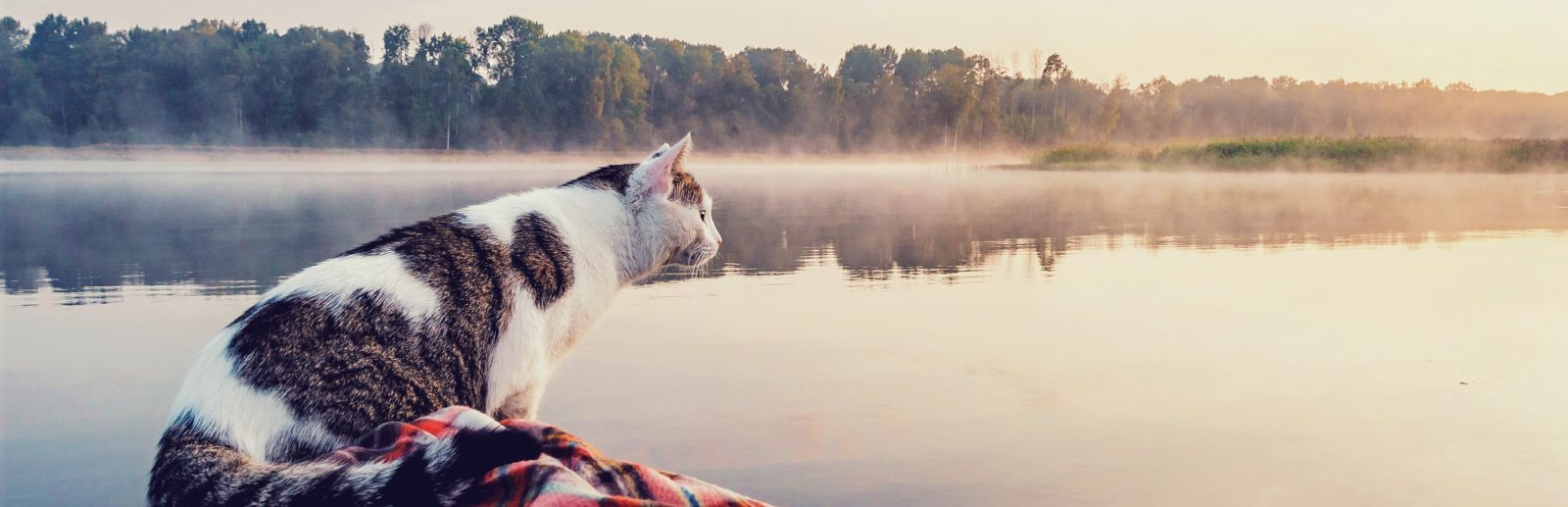 cat looking at water
