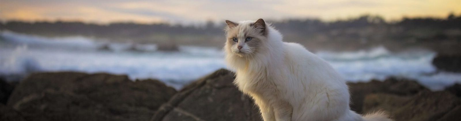 cat by water