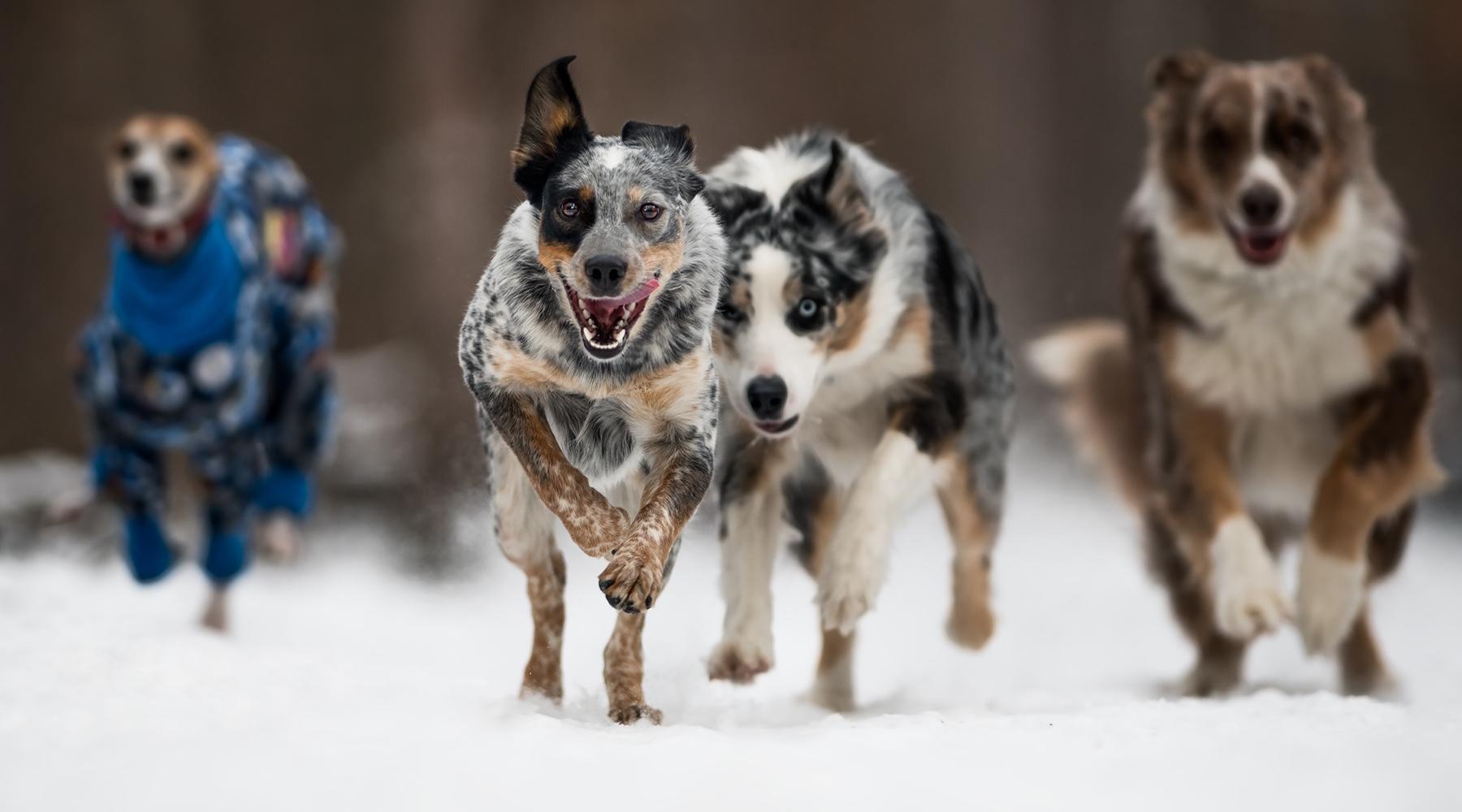Activités hivernales amusantes pour vous et votre compagnon adoré