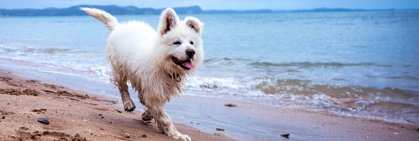 Banner Dog - Calm & Comfort