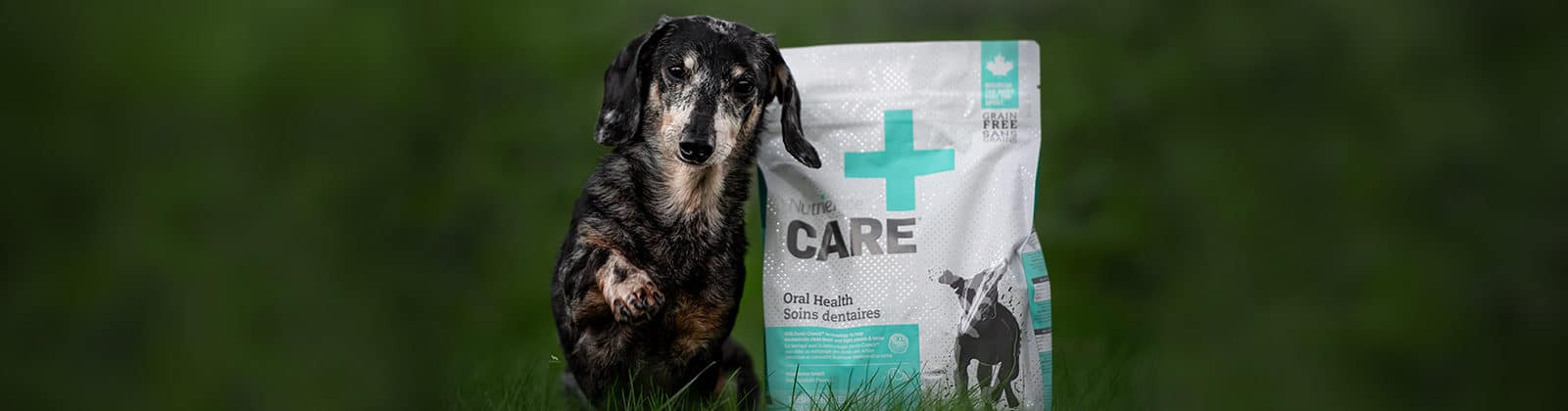 Nutrience Care Oral Health for dogs