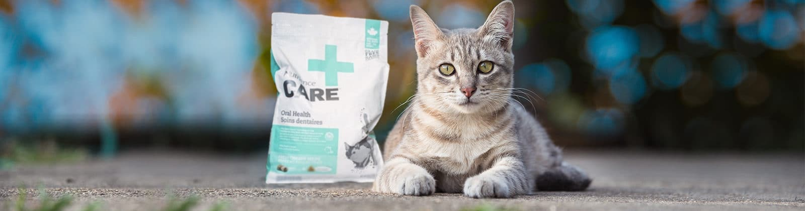 Nutrience Care Oral Health cat