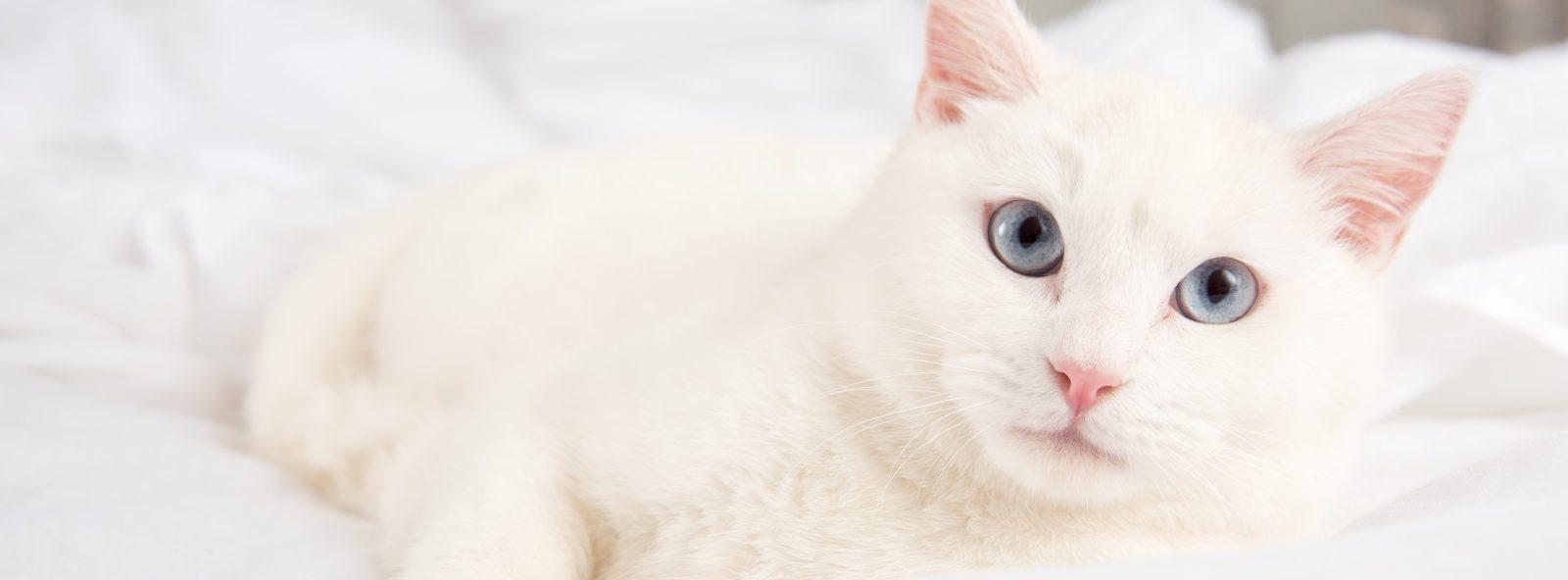 cat-care