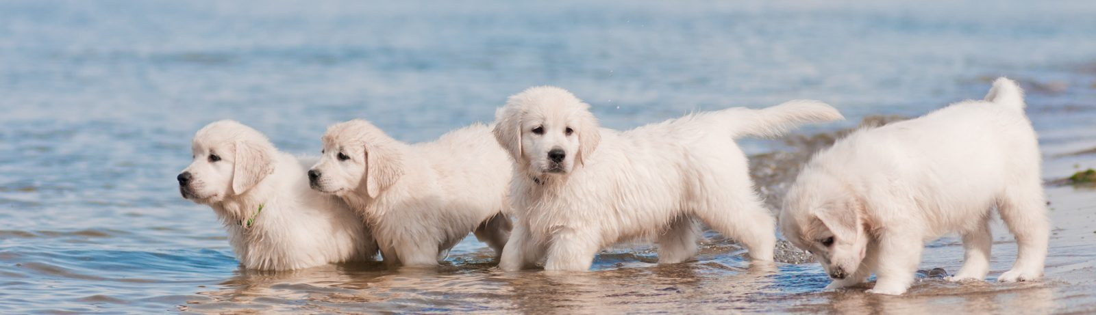 puppies playing on the beach