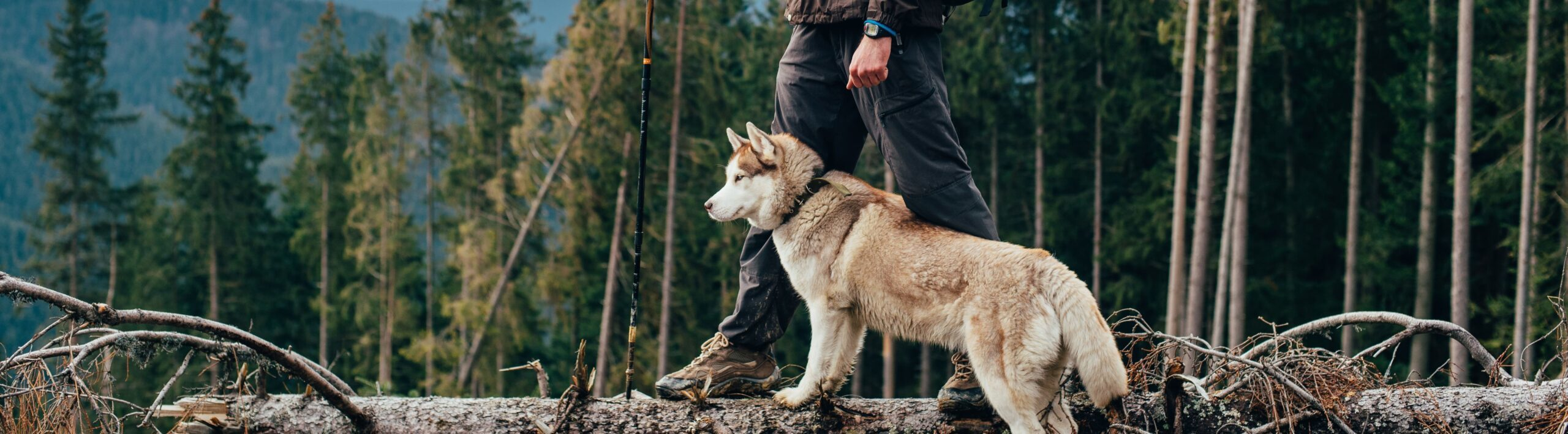 husky hike with man