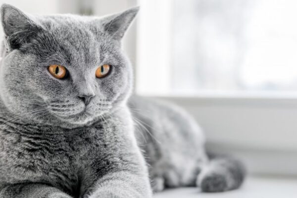 Conseils pratiques pour rendre sa maison sûre pour les chats