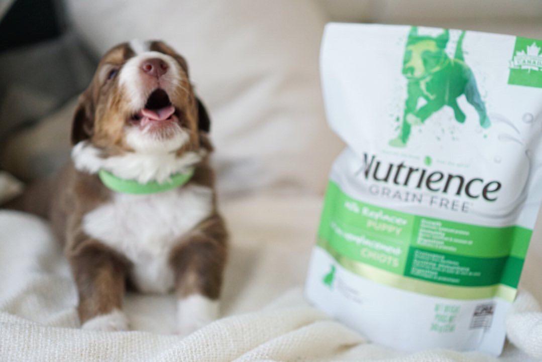 lait de remplacement pour chiots Nutrience