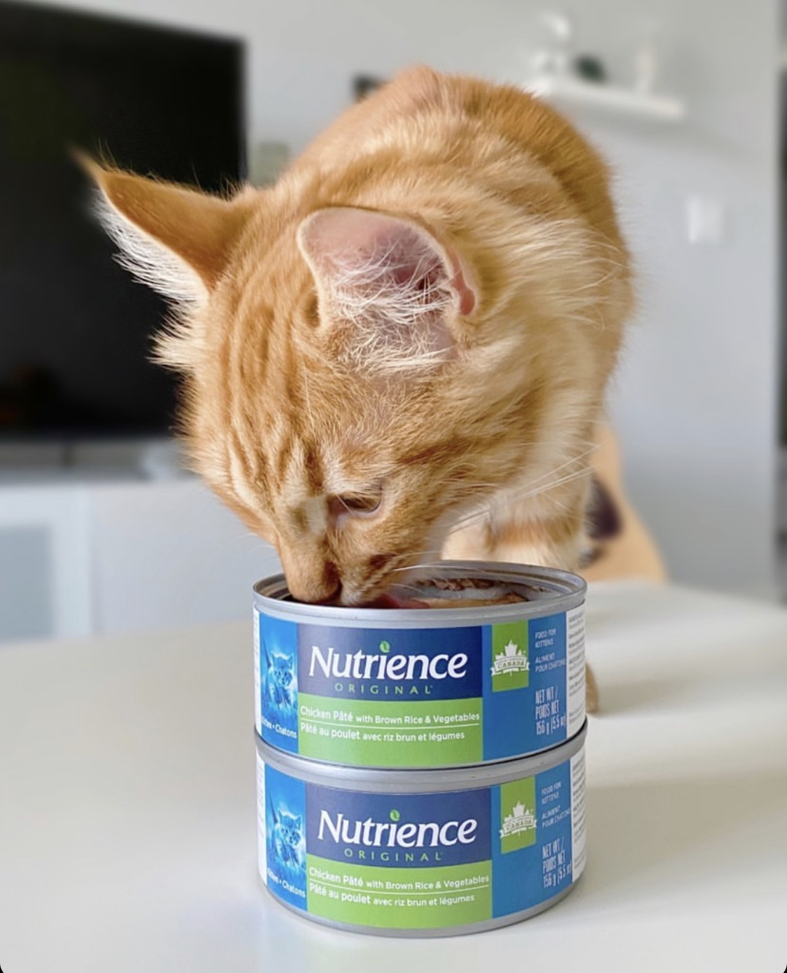 cat with Nutrience Original