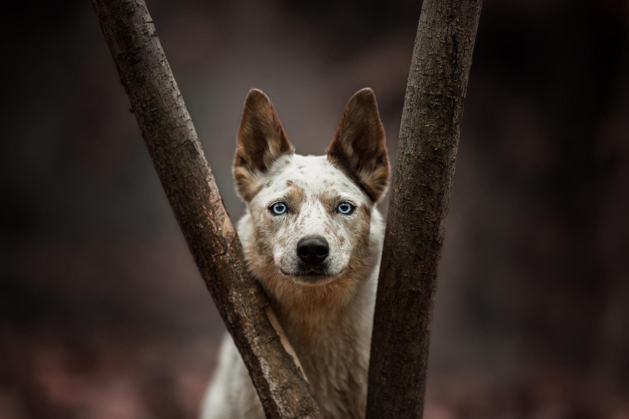Dog between tree