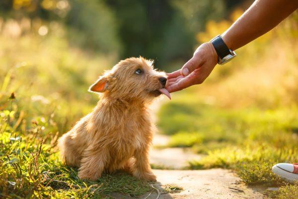 Les parcs à chiens sont-ils sûrs pour les chiots?