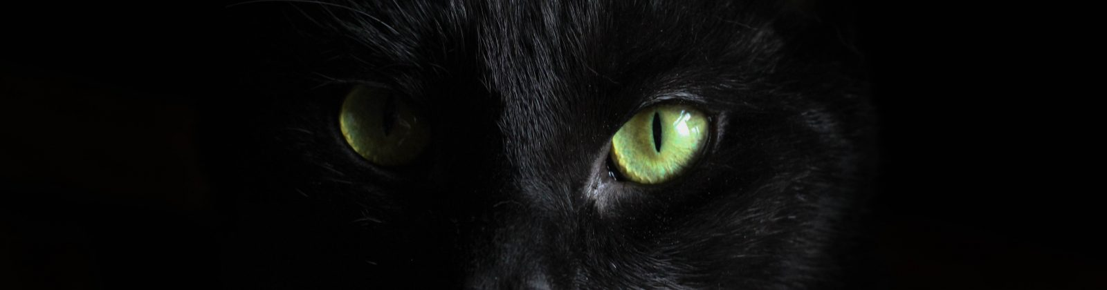 cat eyes black cat