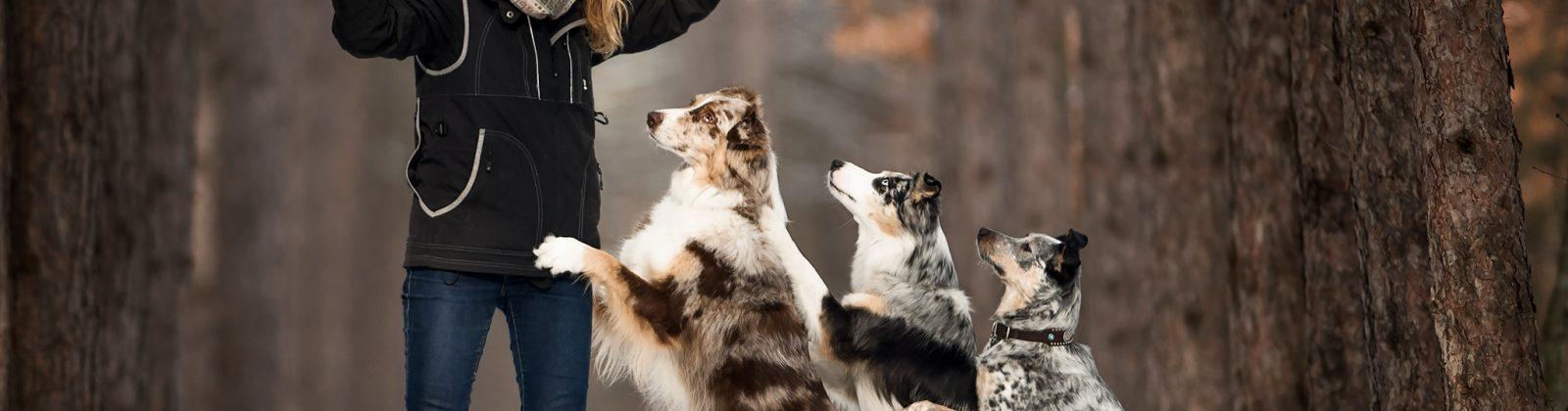 mental health dogs - santé mentale chiens