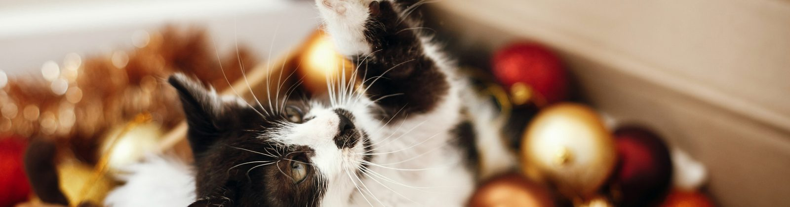 cat safety christmas