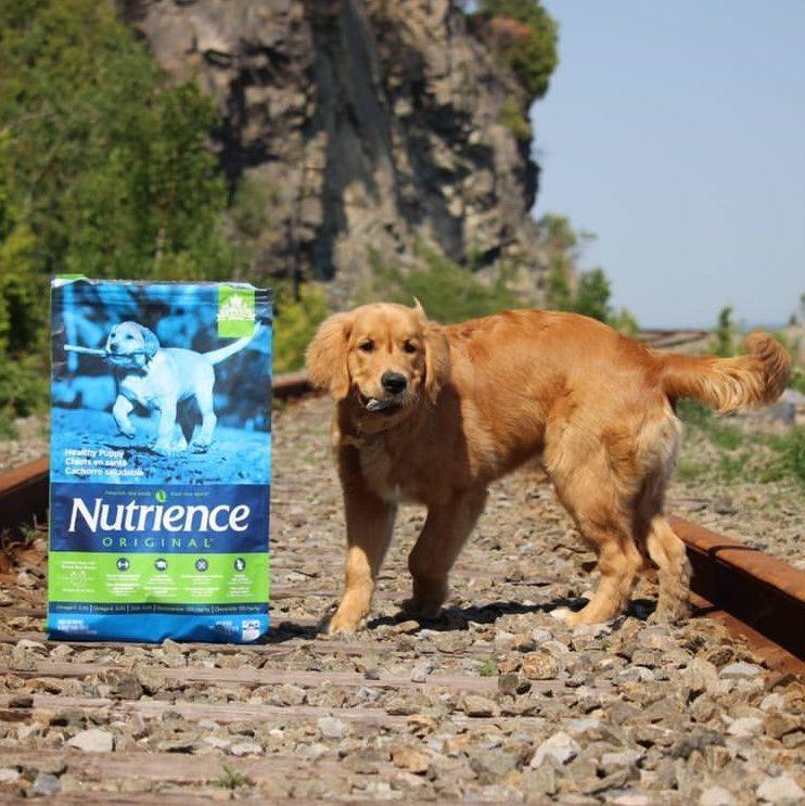 Nutrience Original puppy food