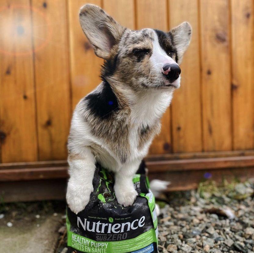 Nutrience SubZero puppy food