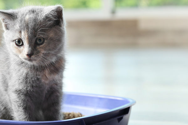 How to Ensure My Kitten Uses Their Litter Box?