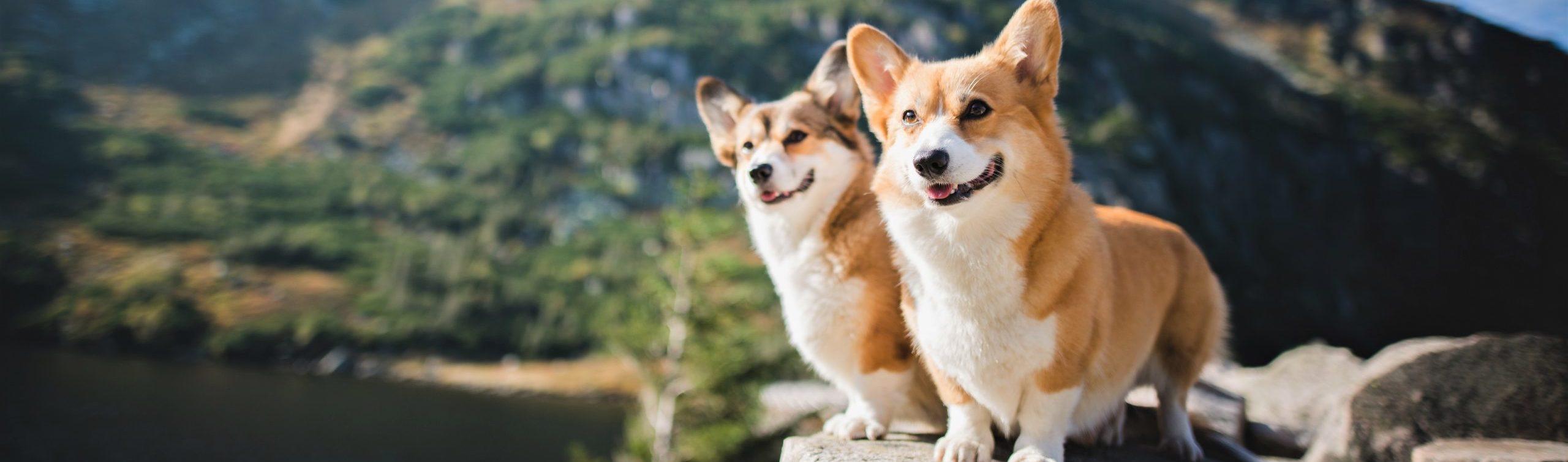 Nutrience Care dogs
