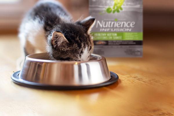 Aliments Nutrience pour chatons: choisir le bon aliment pour son chaton