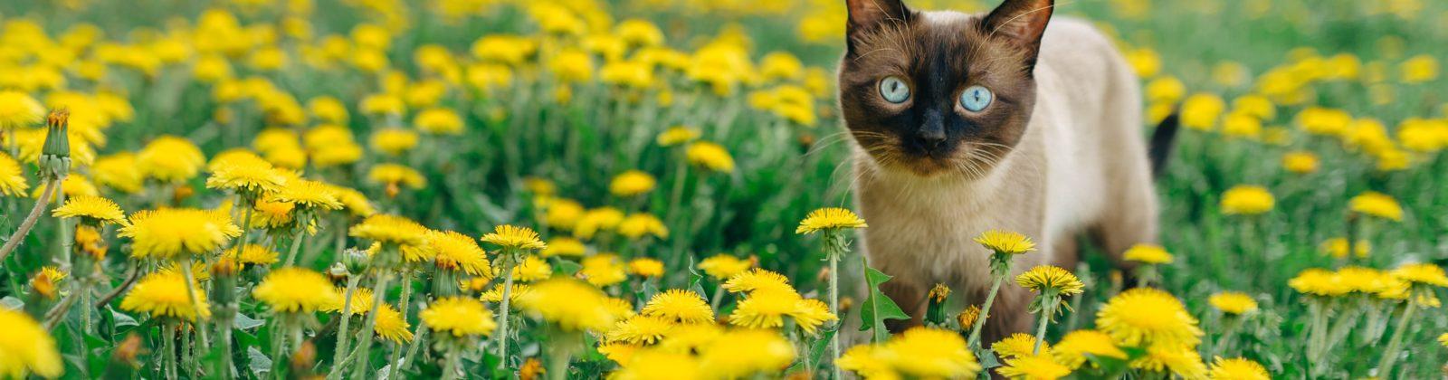 is it safe kitten outdoors