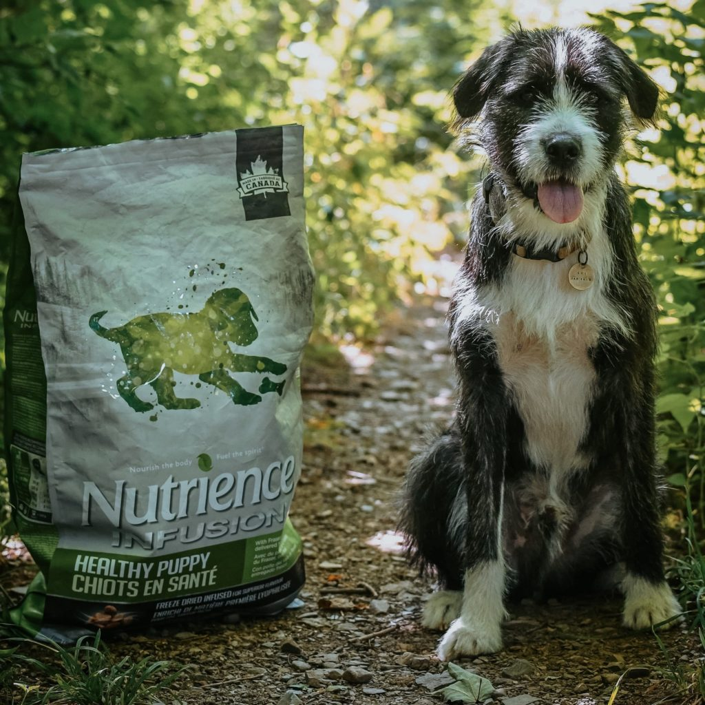 Nutrience Infusion puppy food
