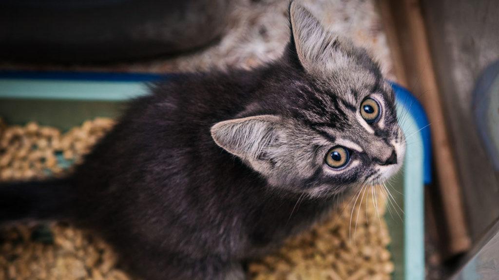chaton bac à litière