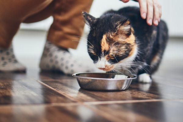 How and When Should I Transition my Kitten Onto An Adult Cat Food?