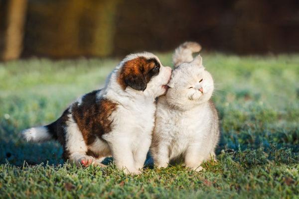 Présenter votre chiot à un autre chien ou à un chat