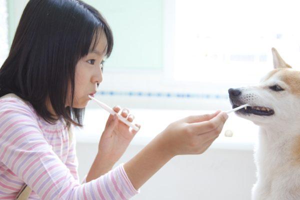 Prévenir les problèmes de santé bucco-dentaire chez les chats et chiens