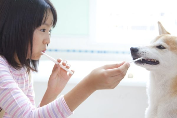 Preventing Oral Health Problems in Cats and Dogs