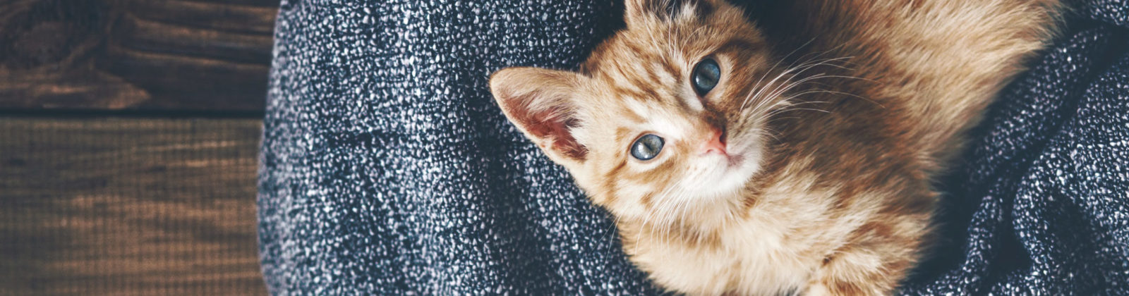 kitten home alone