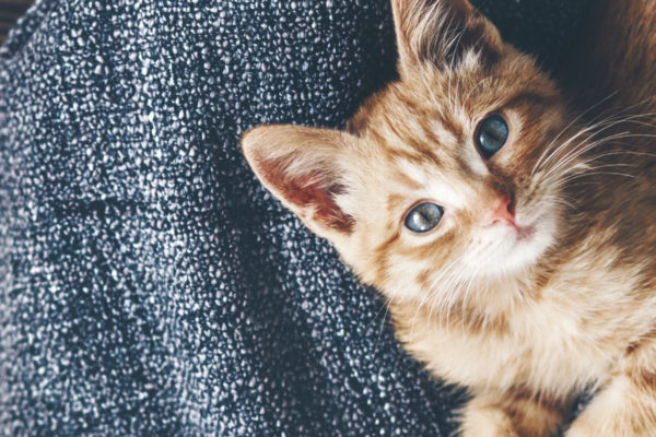 How Does Canned Food Help with Urinary Problems in Cats?