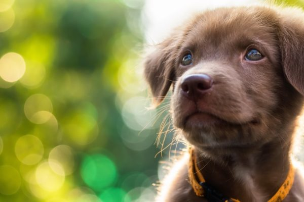 Nutrience Puppy Food: How to Pick the Right One