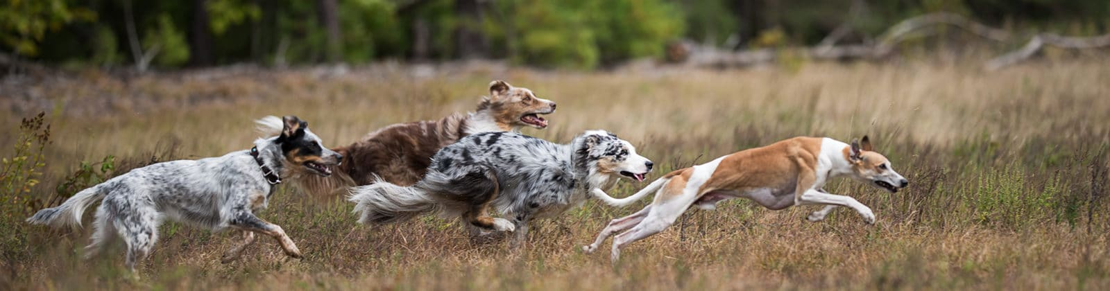 chiens assez exercice