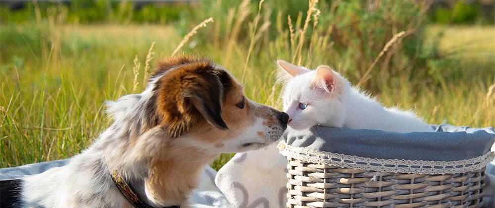 dog cat spring picnic