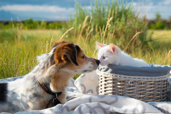Is Your Dog or Cat Ready for Spring?