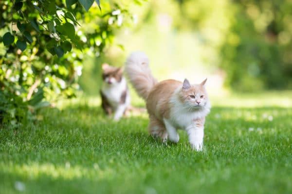 Quoi faire si mon chat est en surpoids ou obèse?